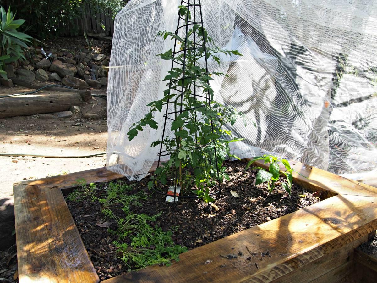 Veggie Patch Style-Home Improvement Thursday #HIT