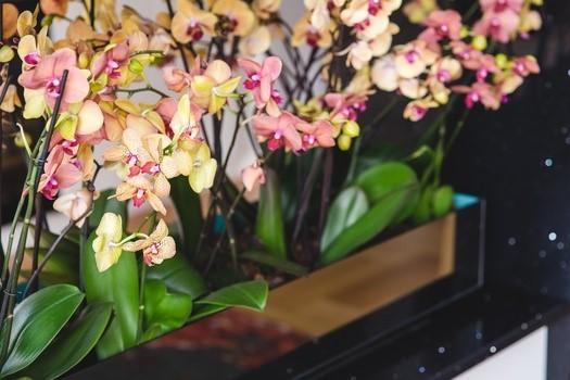 flowers-yellow-pink-orchid-medium1-e1446971896914
