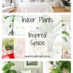 Indoor Plants – Inspired Space