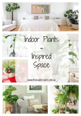 Indoor Plants – Inspired Space