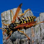 A Guide To Managing The Summer Creepy Crawlies!