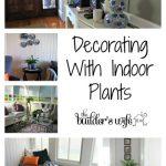 Decorating With Indoor Plants – Pen Y Llechwedd
